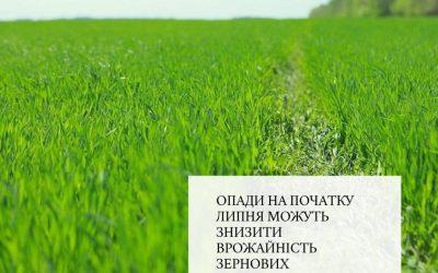 Опади на початку липня можуть знизити врожайність зернових